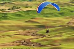 Soaring Above The Palouse (Stephen Kacirek) Tags: sports landscape paraglider palouse actionsports easternwashington palousehills steptoebutte palouseparagliding paraglidingonsteptoebutte