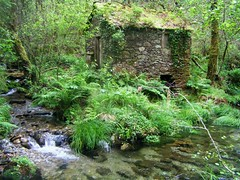 Ro Grovas por TeresalaLoba (TeresalaLoba) Tags: mill trekking walking moulin spain hiking holly molino galicia senderismo pontevedra vacas acebo ilexaquifolium laln muio cortello acivro zobra terrademontes arquitecturatradicionalgalega serradocandn teresalaloba ameixedo rednatura2000 riogrobas riogrovas devesadeameixedo fragadeameixedo