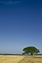 | The Blueeeee Sky (Akilselvan Photography | www.akilselvan.com) Tags: blue sky india abstract tree beautiful beauty photography alone near adventure chennai cwc periyapalayam nh5 flickraward akilan akilselvan wwwakilselvancom