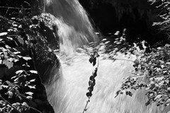 Falls on K.L.O. Creek 6 (LongInt57) Tags: bw white motion black blur fall water forest grey mono waterfall action gray canyon falls waterfalls canyons forests