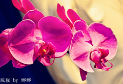 Beautiful flower ( Nana) Tags: flowers plant love nature beautiful nikon colorful bokeh taiwan lovely beautifulflower i bokehlicious  d7000