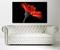 RED PETALS ON BLACK (Canvas Art Shop) Tags: flowers art floral wallart posters prints homedecor flowerart floralprints canvasart canvasprints flowerprints flowerwallart flowercanvasprints flowercanvasart