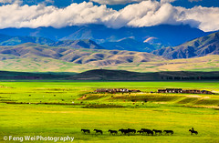 Land of Freedom (Feng Wei Photography) Tags: china trip travel light mountain color tourism nature beautiful beauty spectacular relax landscape freedom scenery colorful asia view ride outdoor magic horizon relaxing scenic free vivid peaceful charm journey serenity vista xinjiang serene prairie charming pastoral relaxed grassland magical rider kazakh tianshan zhaosu normad normadic keerkante
