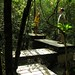 Elevated walkway, Khao Yai National Park, Thailand
