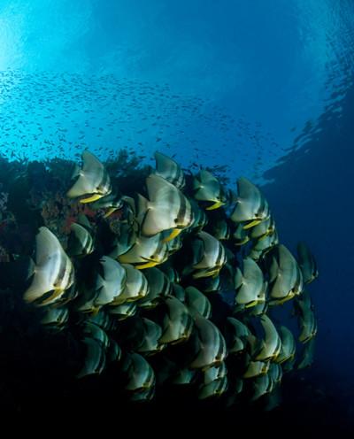 Alor Indonesia