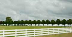 Row of Trees (RC Davis) Tags: trees white blur green field grass fence fineart perspective angles blurred impressionism greenfield treeline impressionistic whitefence myopic fineartphotography pointillism rowoftrees pointillistic photothatlookslikeapainting