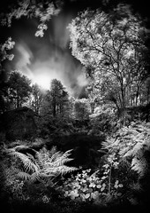 Dark, cool, stagnant (M7261783) (Mel Stephens) Tags: wood uk longexposure summer bw panorama plants white black water pool silver geotagged ir scotland long exposure july olympus panoramic best aberdeen le infrared gps zuiko stitched hdr q3 43 omd 2012 ptgui m43 fourthirds em5 efex mirrorless mmf3 201207 micro43 microfourthirds 918mm tollohill