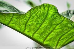 Amazing Light (Johny George) Tags: me2youphotographylevel1