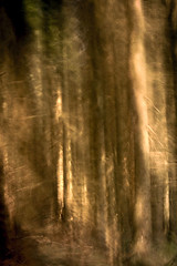 Light in the Woods (shaun-walby photography) Tags: woods forest trees art intensionalcameramovement icm multipleexposure woodland light lightrays fineart fineartphotography abstract