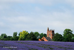 All Saints - Rayne (mpw1421) Tags: trees summer tree tower church architecture outdoors landscapes nikon worship farming crop fields crops borage essex rayne d60 churchofengland unlimitedphotos dioceseofchelmsford