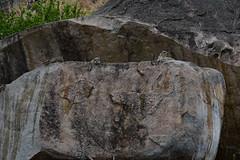 Mongoose near Ruaha River Lodge (2) (Prof. Mortel) Tags: tanzania ruahanationalpark mongoose