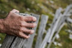 Hand on wood fence (Stefania Pascucci) Tags: fence hand hff