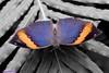 K46A8087-2 (Yvonne23021984) Tags: schmetterling butterfly hamm germany deutschland maxipark markro photography macrophotography canon canonphotography markofotografy canoneos7dmarkii insects insekten nature naturfotografie naturephotography closeup colorkey schmetterlinge butterflies