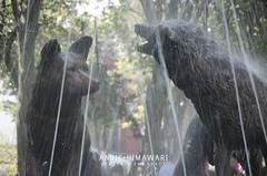 042 (Annie Himawari) Tags: fuente coyoacan coyotes mxico