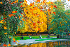 A  matter of focus (Steve-h) Tags: autumn fall nature natur natura naturaleza park red orange gold green colour colours lady woman men bench benches grass birds gulls reflections ststephensgreen dublin ireland europe ef eos canon camera lens october 2015 steveh