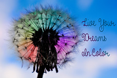 Dandelion (nownowfatcat) Tags: c colorful dandelion weed wishes dream live life beauty