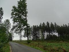 halber Baum (markus_rgb) Tags: baum halb strase sturm wind ste wald