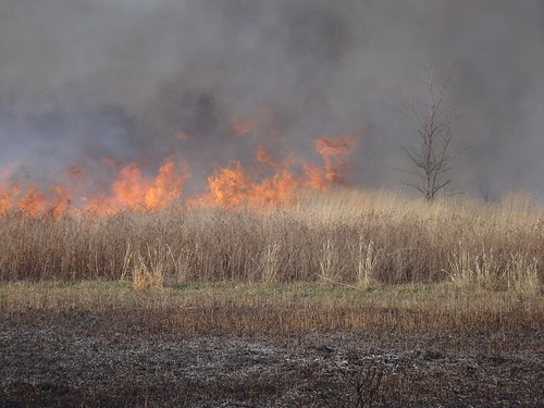 Fire Management in the Tall-grass Prairi by USFWS Mountain Prairie, on Flickr