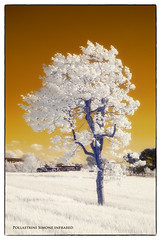 albero (simone@magicaries.com) Tags: simone infrared toscana albero y2 d80 superblu pollastrini