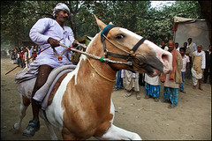 Horse Riding - Sonepur (Maciej Dakowicz) Tags: city horses horse india animal asia crowd fair riding mela bihar sonepur sonepurmela