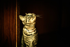 Look Up on the Bright Side of Life (moaan) Tags: feline cat americanshorthair mixedbreed lookup ryokan japaneseinn hall shimofuro shimofurospa kazamauramura aomori canoneos5dmarkiii ef50mmf12lusm 50mm f12 bokeh dof digital utata 2012    thelittledoglaughed