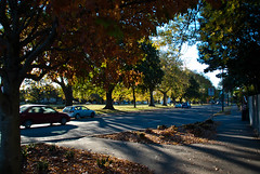 Long Shadows (Jocey K) Tags: road park street autumn trees newzealand christchurch cars leaves buildings shadows pathway