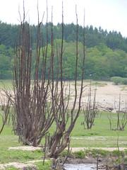 Pannecire (Pierre MM) Tags: france de lac bourgogne barrage travaux morvan vide nivre pannecire batardeau chaumart