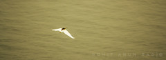 32 (Rohit Arun Rao) Tags: bird flight free hights himayatsagar