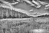 Corkscrew in B&W (Chrissy Avila Photography (cHrIsSy1554)) Tags: landscape photography florida floridawildlife corkscrewswampsanctuary southfloridawildlife ©csquaredphotography chrissy1554 ©christinaavilaphotography ©chrissyavilaphotography wwwchrissyavilaphotographycom