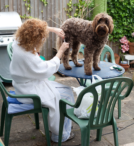 Dog shearing