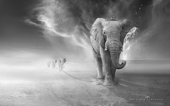 Elephants trip (suliman almawash) Tags: art digital photoshop suliman sulaiman      almawash