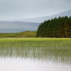 Isle of Skye (gacumbria) Tags: green reeds grey scotland pattern isleofskye natural loch fell conifers lochcillchriosd