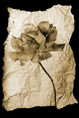 everlasting composite (blueskyjunction photography) Tags: old uk england plant flower london rose composite paper petals stem nikon ripped petal worn torn weathered tear dslr wrinkles stalk crushed 2012 crumpled d90 seoia