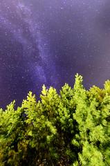The Milky Way (Brian Koprowski) Tags: sky tree wisconsin night stars friendship adams pentax galaxy wi milkyway milkywaygalaxy Astrometrydotnet:status=failed pentaxk5 briankoprowski bkoprowski Astrometrydotnet:id=alpha20120790516582