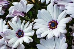Photographer Emil Lundstrom (Emil Lundström) Tags: blue summer flower green yellow canon purple blossom sweden stockholm mark iii 5d emil lundstrom