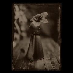 . (czarnobialykwadrat!) Tags: camera wet wooden plate ambrotype 5x7 collodion 13x18 autaut
