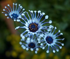 Unique Flowers (Mr.LeeCP) Tags: