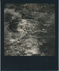 Brook. (N.Misciagna) Tags: new york trees plants white black slr film water analog forest project river polaroid outdoors moss pod woods rocks uv poor upstate tip 600 integral instant brook wilderness 680 adirondaks imposible px bw