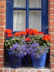 Attractive window (seikinsou) Tags: brussels belgium bruxelles belgique summer window flowerpot flower reflection purple geranium red blue
