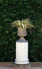 Secret garden (martin.bruntnell) Tags: secretgarden urn flower ludlow