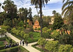 Alcazar Gardens (Hans van der Boom) Tags: europe spain vacation holiday seville sevilla alcazar palace gardens garden palm trees hedges green people sp