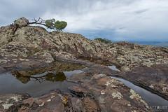 IMGP3013-Edit (Matt_Burt) Tags: hartmanrocks lichen puddle reflection stormy tree