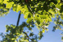 Leaves (Niels A) Tags: fredensborg import20160827 leaves light