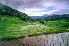 Rice Terraces (Rkitichai) Tags: thailand thaitravel rice terraces field ricefield riceterraces landscape landscapephotography travelphotography travel nature naturephotography wanderlust travelnutzmn fbmetravelnutzrpt rkitichai