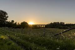 20160824_Obersee-29 (www.arternative-design.com) Tags: bielefeld d810 landschaftsfotografie liebefeld nikkor nikon nikond810 owl obersee ostwestfalen ostwestfalenlippe sonnenuntergang tamron tamron1530 vieadukt weitwinkel landscape landscapeporn sundown sunset