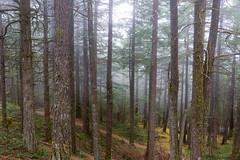 Misty PNW Forests (erickPDX) Tags: sanjuanislands orcasisland demorcas washington pnw