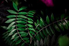 Botanical Series6 (Elena Picart) Tags: elenapavlova floralartprint interiors modern minimal flowerphotographs floralart botanicalprint flowerphotography garden spring decor naturedecor blossoms picargallery