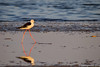 Molentargius 9 (Rawby) Tags: sardegna molentargius stagno uccelli