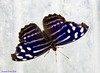 K46A8144 (Yvonne23021984) Tags: schmetterling butterfly hamm germany deutschland maxipark markro photography macrophotography canon canonphotography markofotografy canoneos7dmarkii insects insekten nature naturfotografie naturephotography closeup colorkey schmetterlinge butterflies