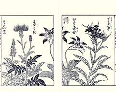 Culvers root, Japanese thistle, Japanese trout lily and amsonia (Japanese Flower and Bird Art) Tags: flower culvers root veronicastrum sibiricum scrophulariaceae thistle cirsium japonicum asteraceae trout lily erythronium liliaceae amsonia elliptica apocynaceae yasukuni tachibana kano woodblock picture book japan japanese art readercollection